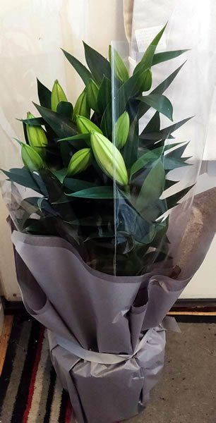 ジョン・トーマス・トイズの素敵な花を示す画像