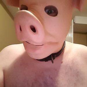 Porcinet dérangé